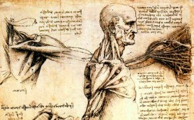 da vinci working of a man